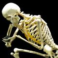 骨が土に還る