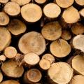 木材と仏壇の関係